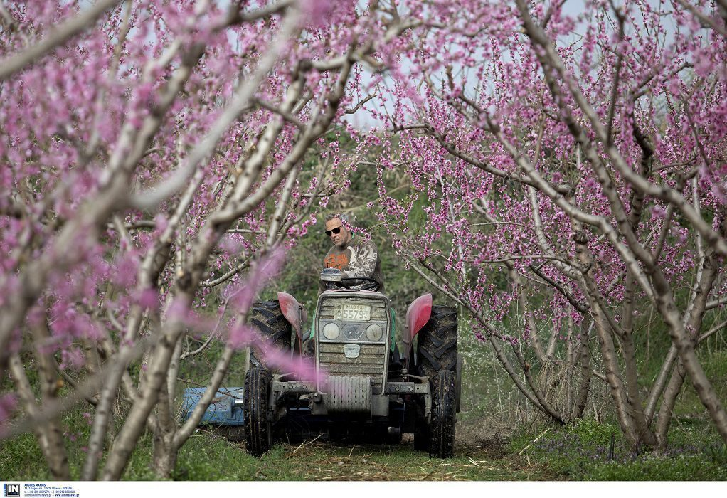 Μετακλητοί εργάτες γης: Με προβλήματα και καθυστερήσεις η διαδικασία