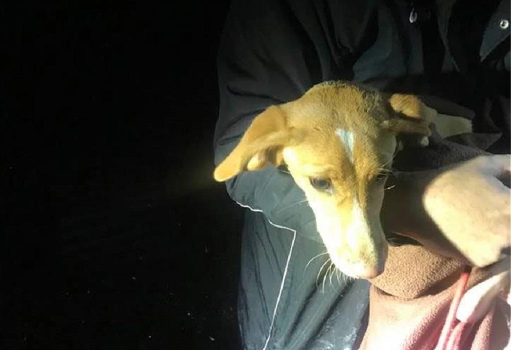 Εορδαία: Έσωσαν σκυλάκι από πηγάδι 13 μέτρων