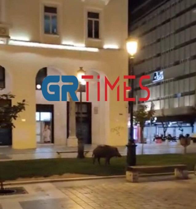 Αγριογούρουνα: Περιμένει το Δασαρχείο για τα όπλα ο Δ. Θεσσαλονίκης