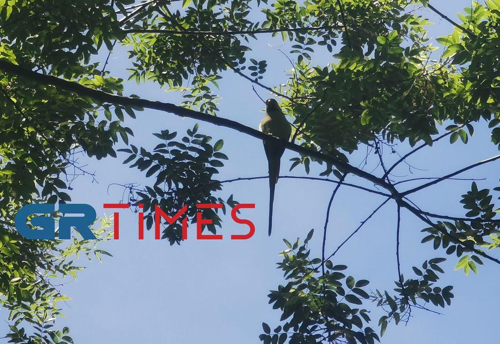 Παπαγάλοι που εντυπωσιάζουν στο κέντρο της Θεσσαλονίκης – Η ιστορία (ΦΩΤΟ+VIDEO)