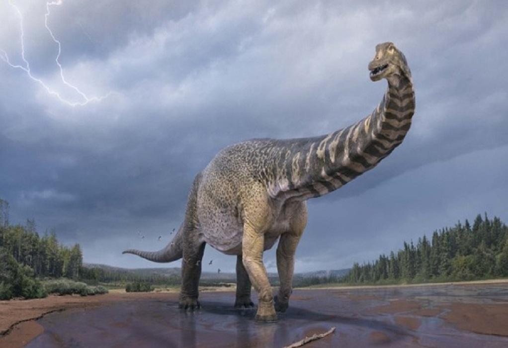 Αυστραλοτιτάν: ο δεινόσαυρος με μήκος ενός γηπέδου μπάσκετ!