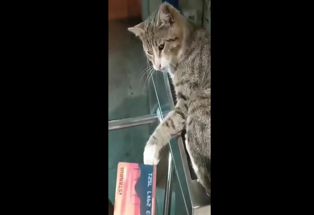 Κωνσταντινούπολη: Viral βίντεο του Ιμάμογλου με γάτα σε ακυρωτικό μηχάνημα του μετρό