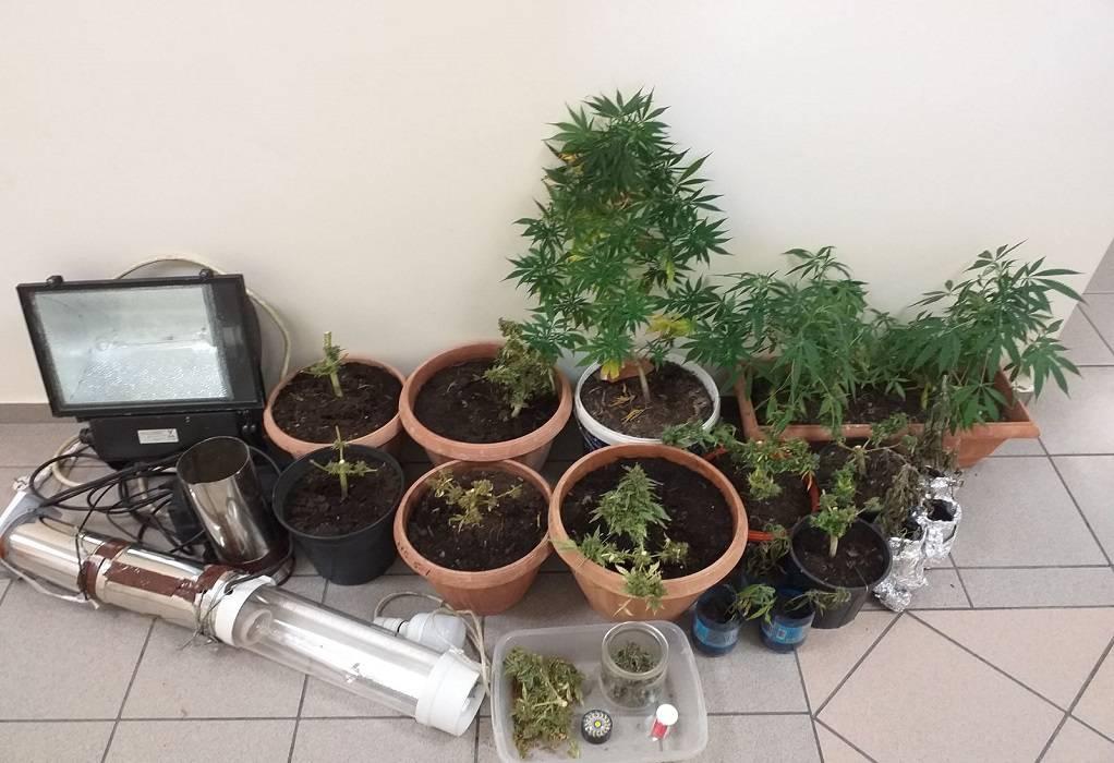 Σάμος: Συνελήφθη γιατί καλλιεργούσε κάνναβη στο σπίτι του