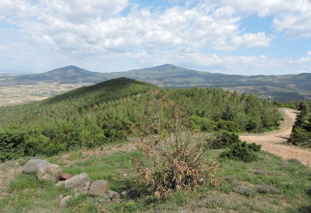 Δήμος Θέρμης: Πρόταση για αναδάσωση 3.560 στρ. στην περιοχή των Βασιλικών