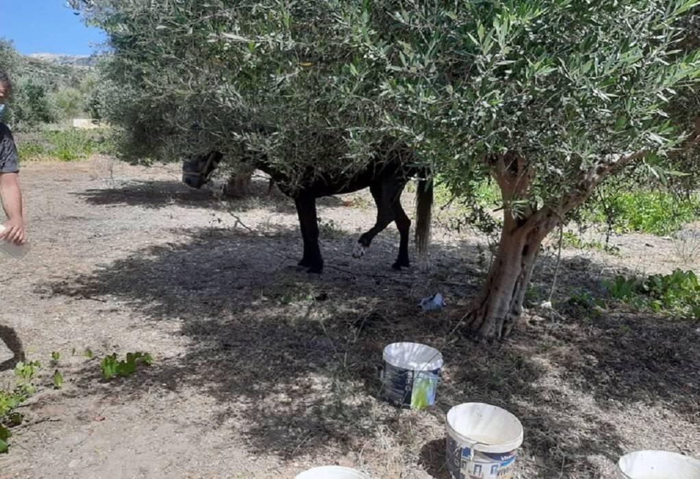 Σύλληψη και πρόστιμο 30.000 ευρώ για κακοποίηση αλόγου