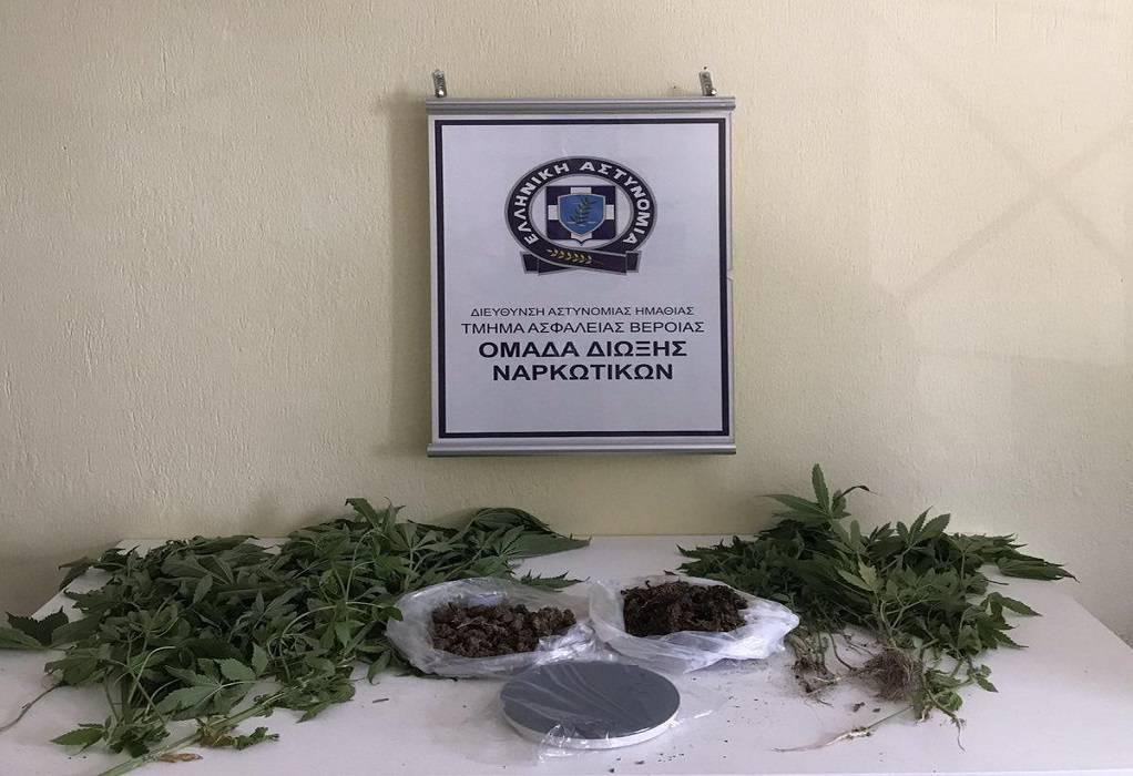Ημαθία: Καλλιεργούσε κάνναβη στην αυλή του σπιτιού του