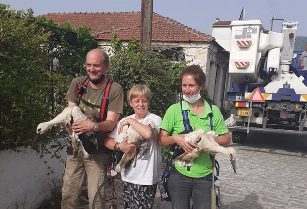 Δήμος Πωγωνίου: Δακτυλιώθηκαν 80 λευκοί πελαργοί!