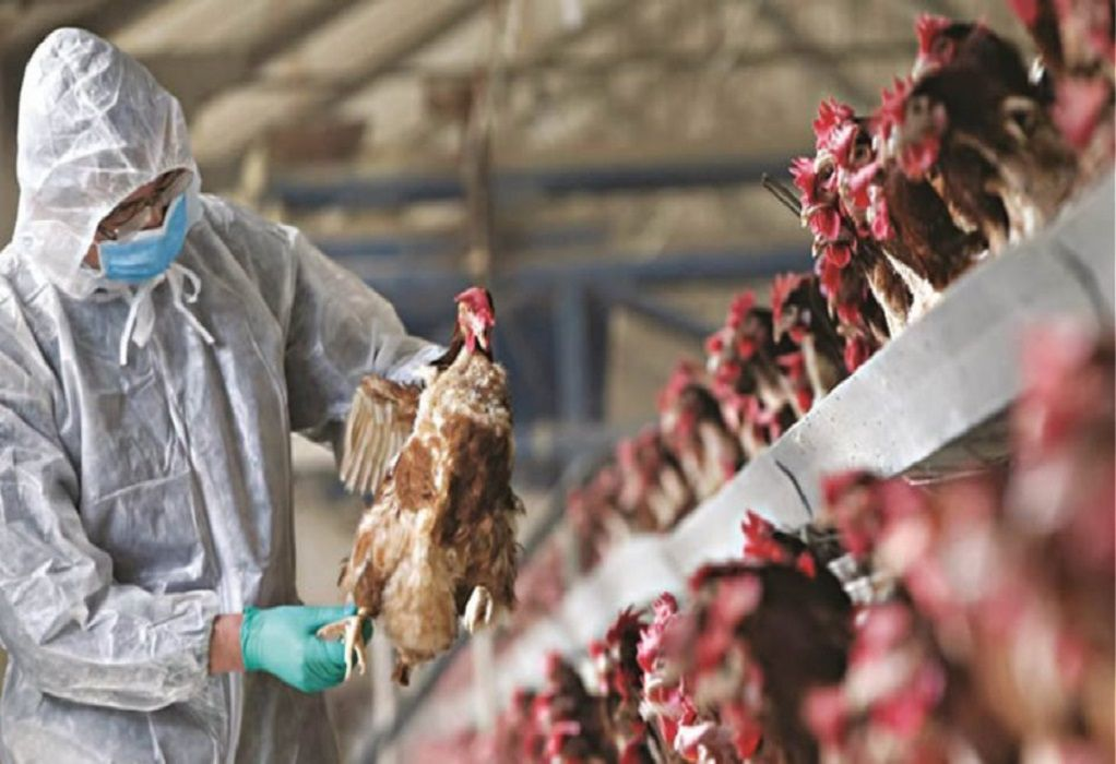 Κίνα: Επιβεβαιώθηκε ένα κρούσμα μόλυνσης από την γρίπη των πτηνών