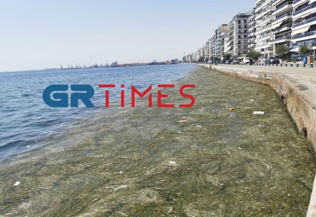 Θεσσαλονίκη: Με φύκια και σκουπίδια ξανά ο Θερμαϊκός (ΦΩΤΟ-VIDEO)