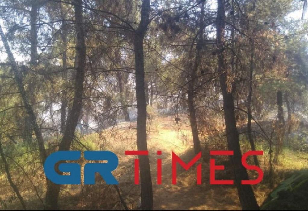 Σέιχ Σου: Η φωτιά σήμανε συναγερμό στον Ζωολογικό Κήπο