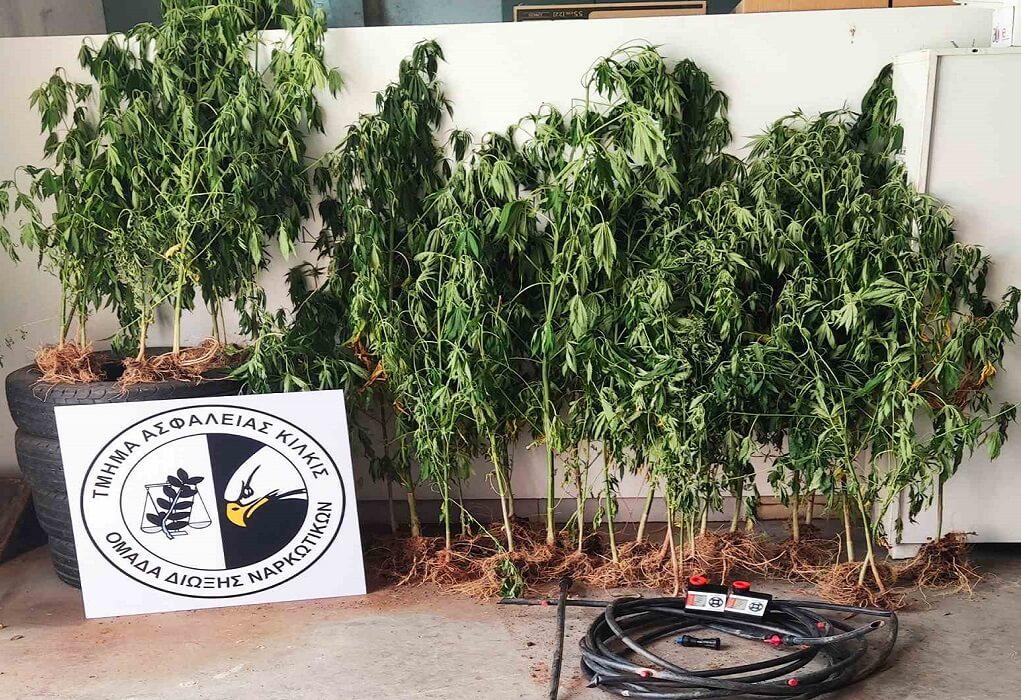 Θεσ/νίκη: Καλλιεργούσε 3 φυτείες κάνναβης με σετ αυτόματου ποτίσματος