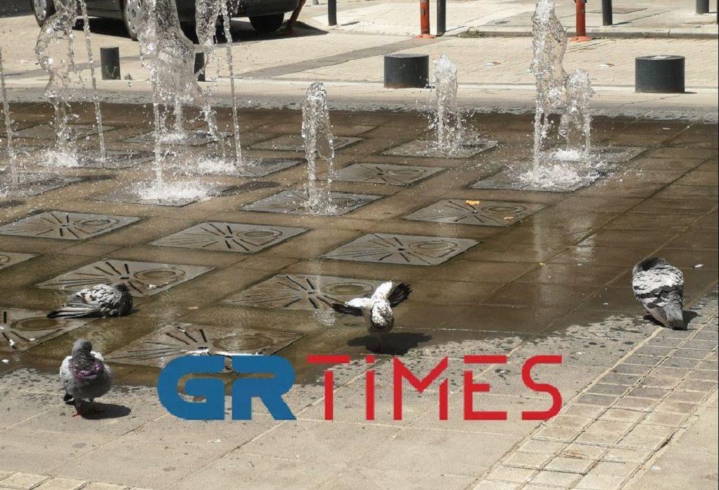 Καύσωνας: «Βράζει» η Θεσσαλονίκη – Δροσιά για τα περιστέρια στα σιντριβάνια (VIDEO)