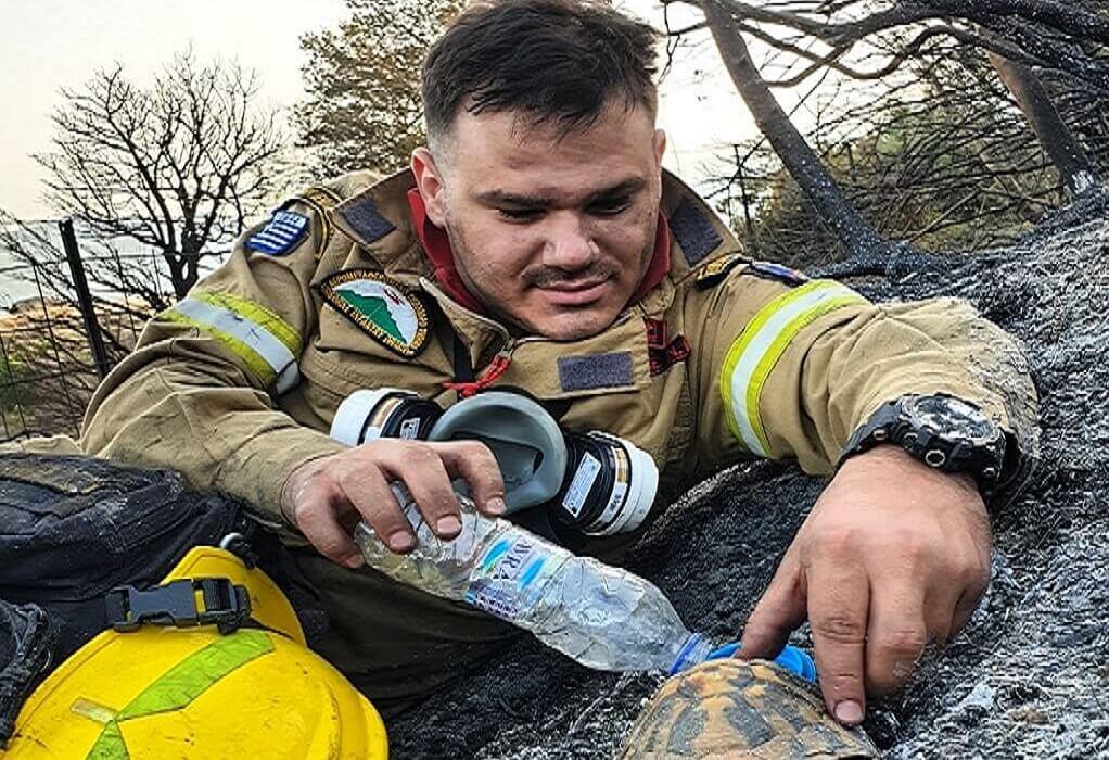 Φωτιά Αχαΐα: Συγκινεί ο πυροσβέστης που δίνει νερό σε χελώνα