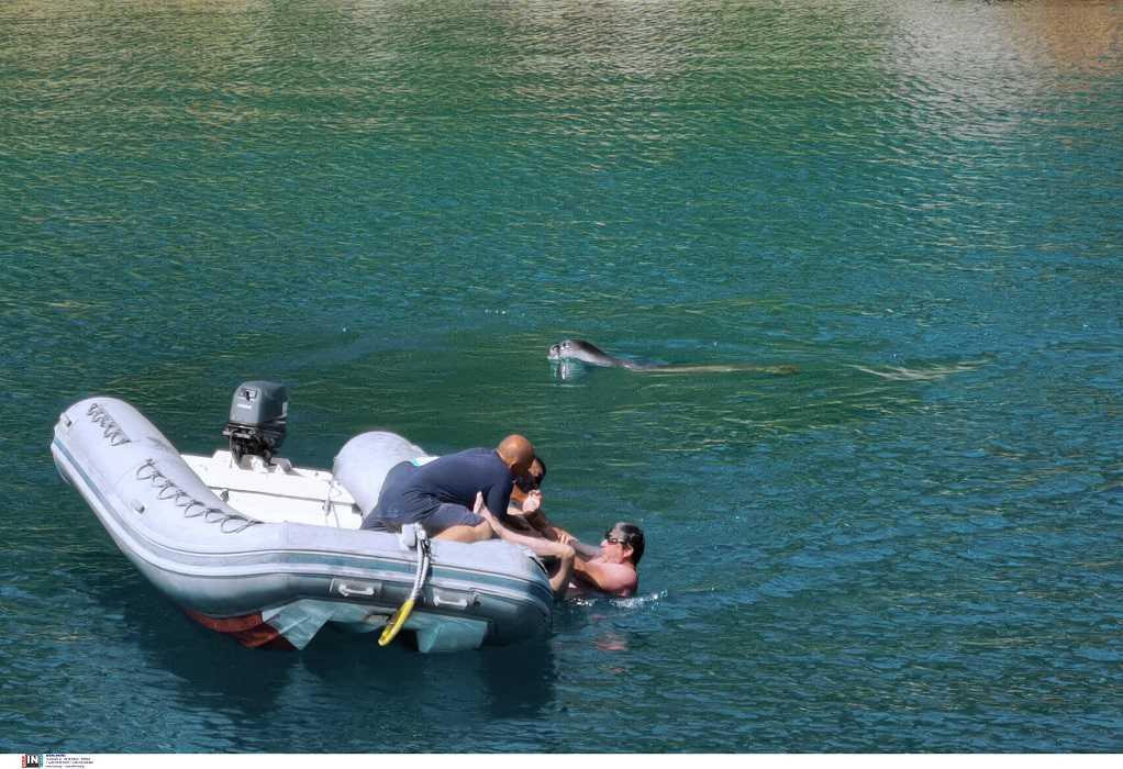 Αλόννησος: Επίθεση φώκιας σε τουρίστα