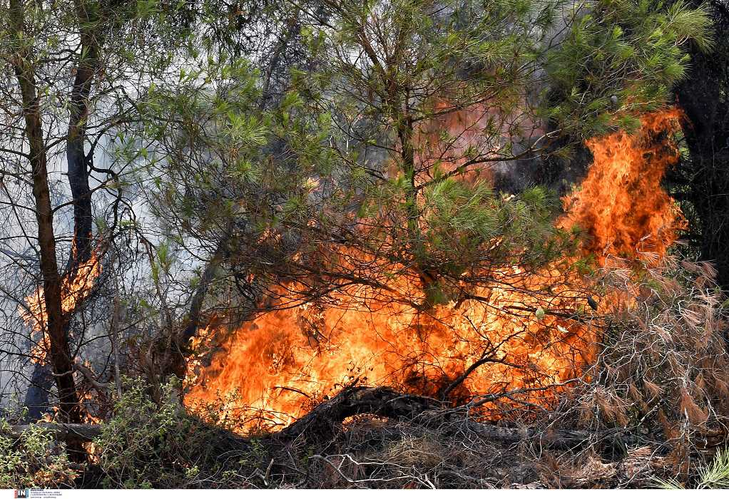 Μεγάλη πυρκαγιά σε δασική έκταση στην Ρόδο