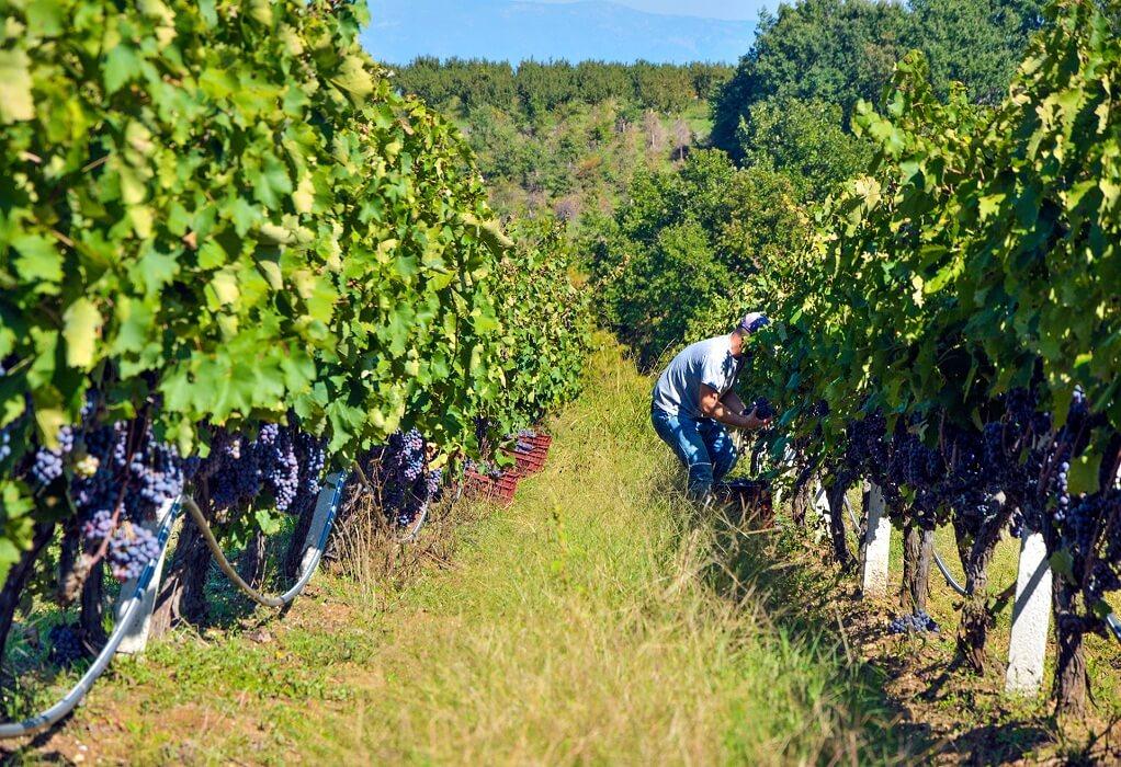 Δήμος Νάουσας: Εξακόσιες φιάλες κρασιού στο βυθό του ποταμού Αράπιτσα
