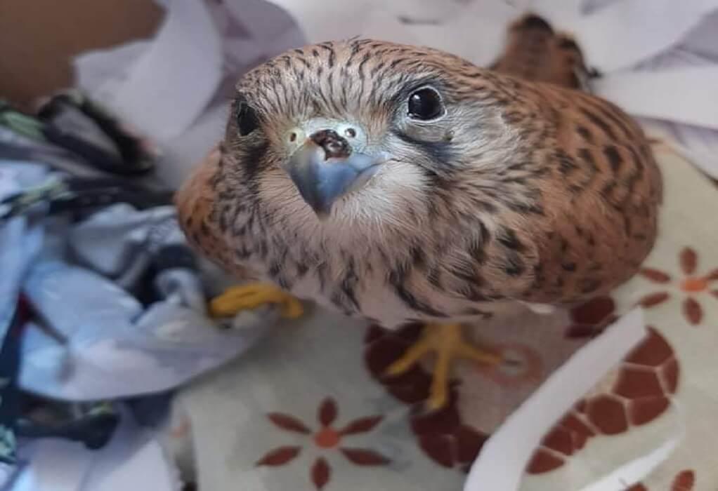 Τραυματισμένα άγρια πουλιά πεθαίνουν στο λιμάνι γιατί αρνούνται να τα μεταφέρουν