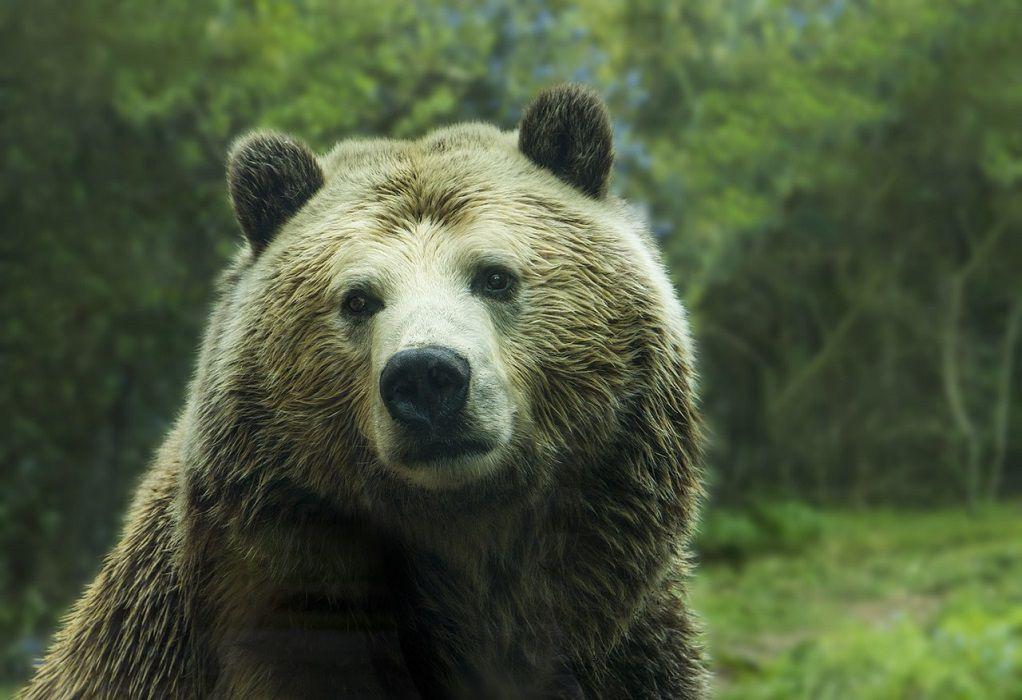 Ζαγόρι: Αρκούδα βγήκε βόλτα τη νύχτα μαζί με τα μικρά της (VIDEO)