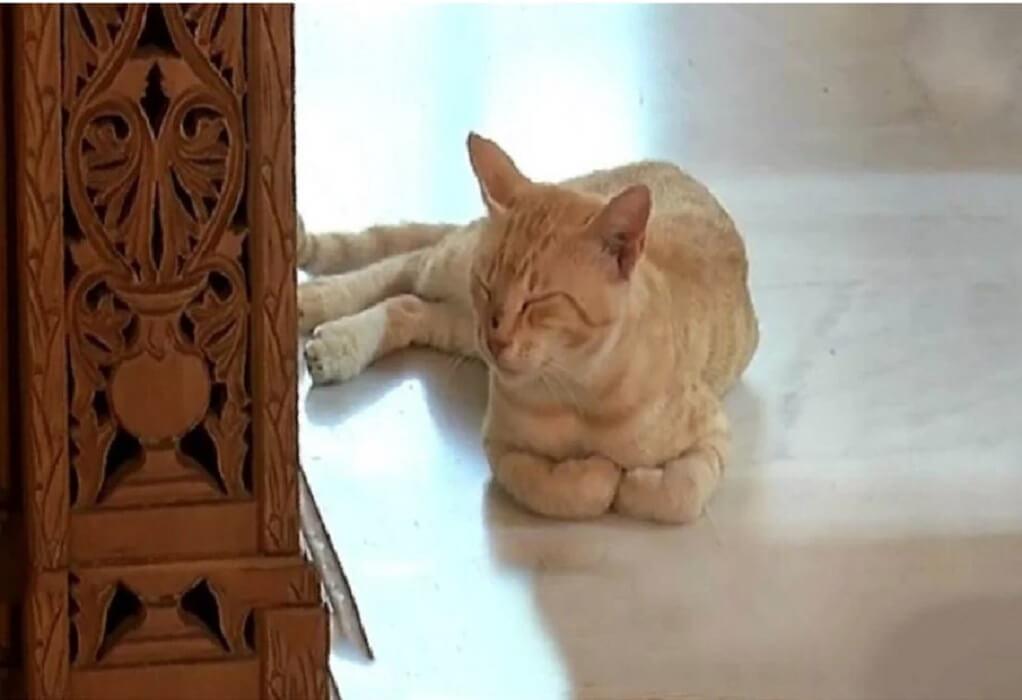 """Κρήτη: Συγκινεί το γατάκι που """"παρευρίσκεται"""" σε κηδείες και """"παρηγορεί"""" τους συγγενείς(VIDEO)"""