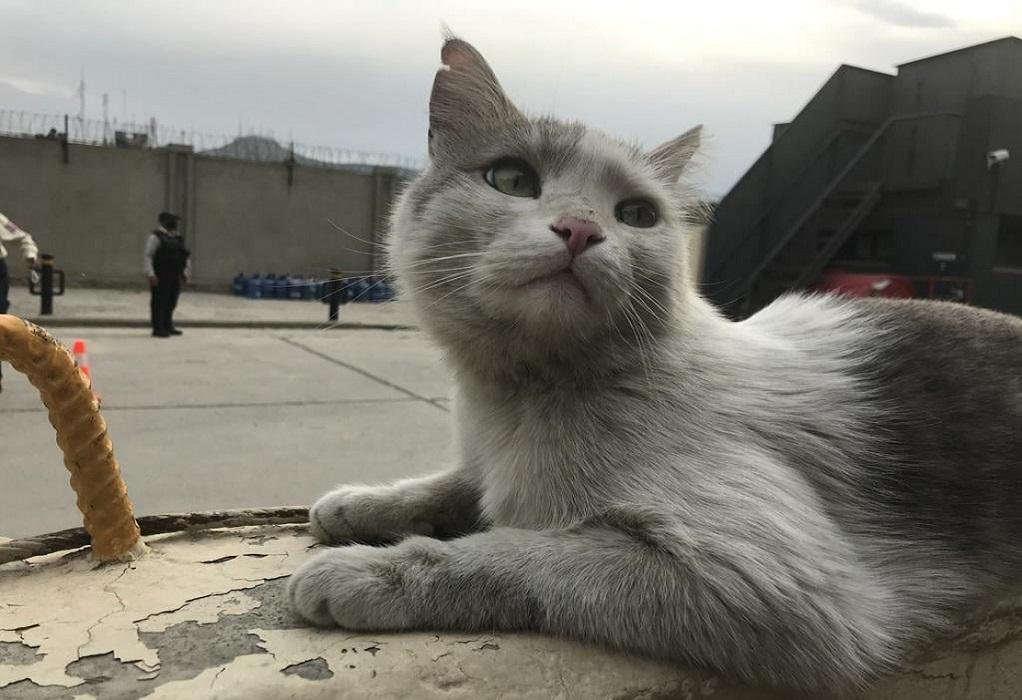Αφγανιστάν: Απομακρύνονται 200 γάτες και σκύλοι προς τη Βρετανία