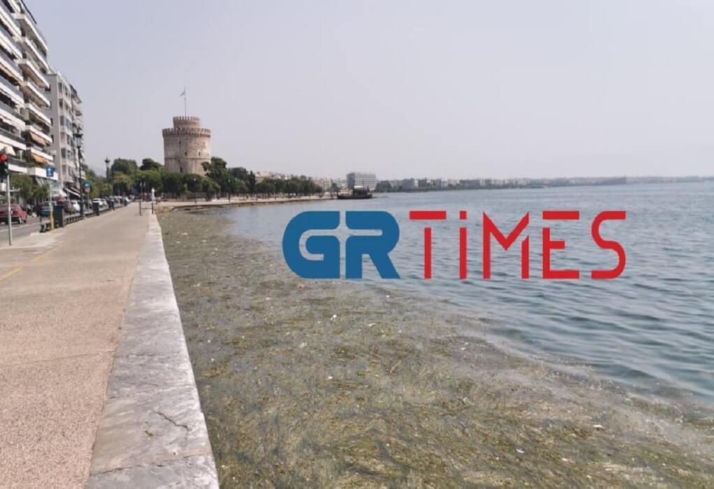 Θεσσαλονίκη: Με νεκρά πτηνά, σκουπίδια και φύκια ξανά ο Θερμαϊκός (ΦΩΤΟ-VIDEO)