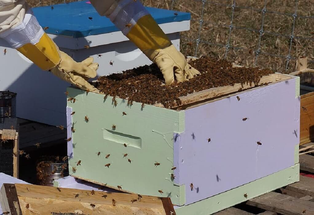 Το πακέτο μέτρων στήριξης μελισσοκόμων στις πυρόπληκτες περιοχές