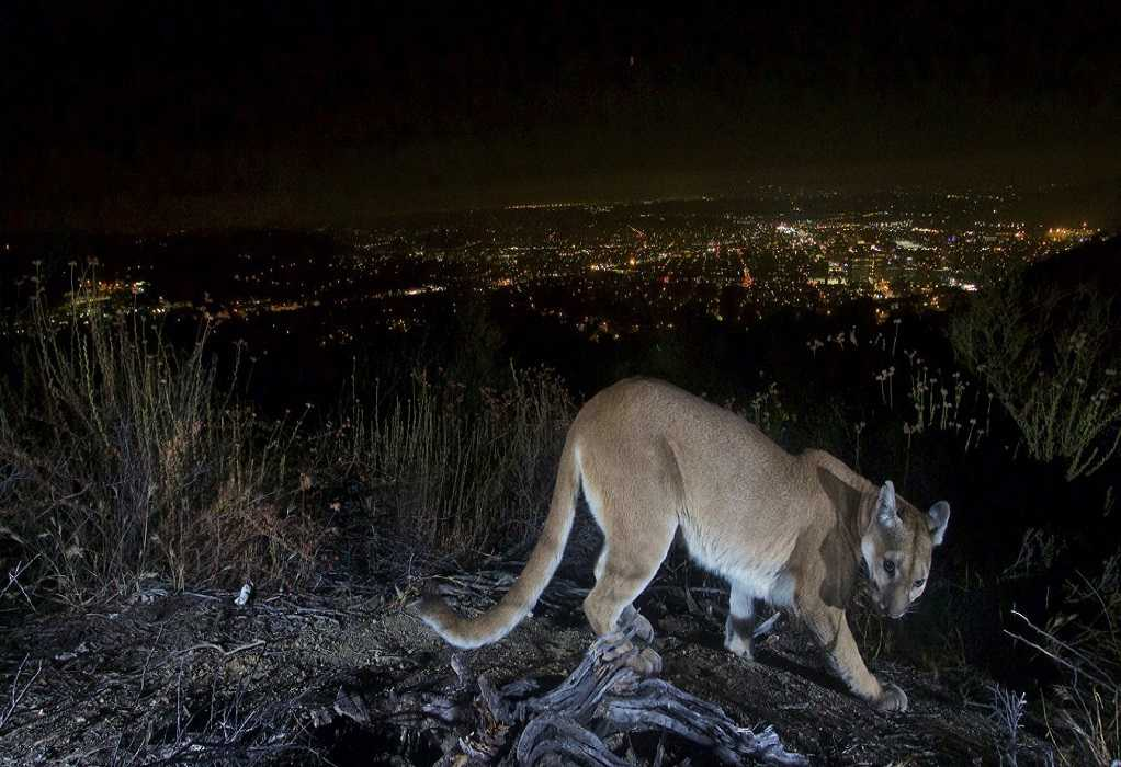 ΗΠΑ: Μητέρα πάλεψε με λιοντάρι που επιτέθηκε στον γιο της και τον έσωσε