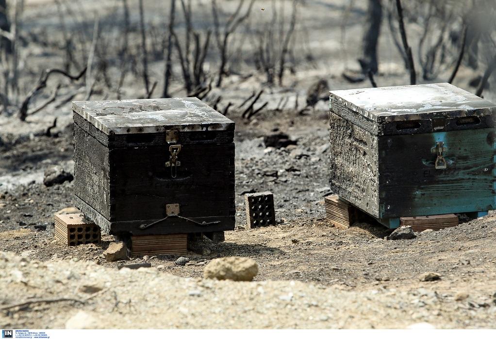 Πρόεδρος ΟΜΣΕ: Απώλεια τεραστίων διαστάσεων η καταστροφή του πευκοδάσους στην Εύβοια