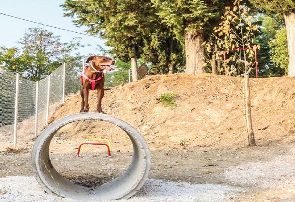 Πάρκο σκύλων με ανακυκλωμένα υλικά στα Τρίκαλα