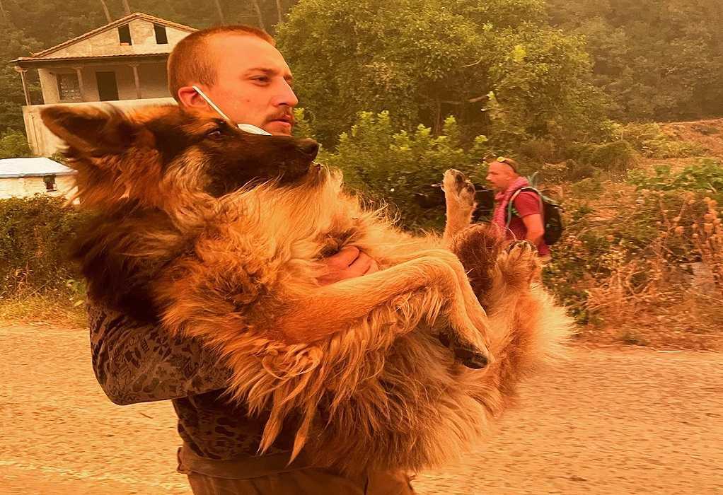 Εύβοια: Eθελοντής σώζει λυκόσκυλο που ο ιδιοκτήτης είχε αφήσει δεμένο να καεί
