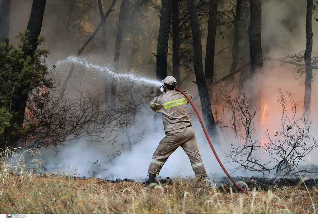 Φωτιές στην Αττική: Δίωξη για εμπρησμό στο Κρυονέρι σε βάρος 43χρονου