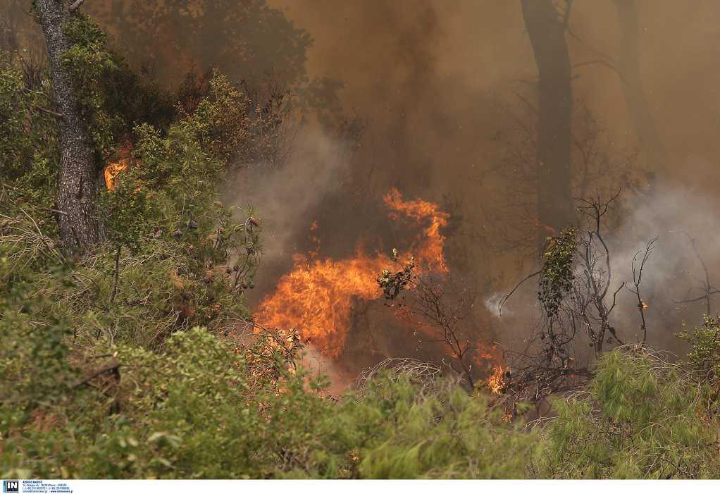 Καστοριά: Φωτιά στον Γράμμο-Σηκώθηκε καναντέρ