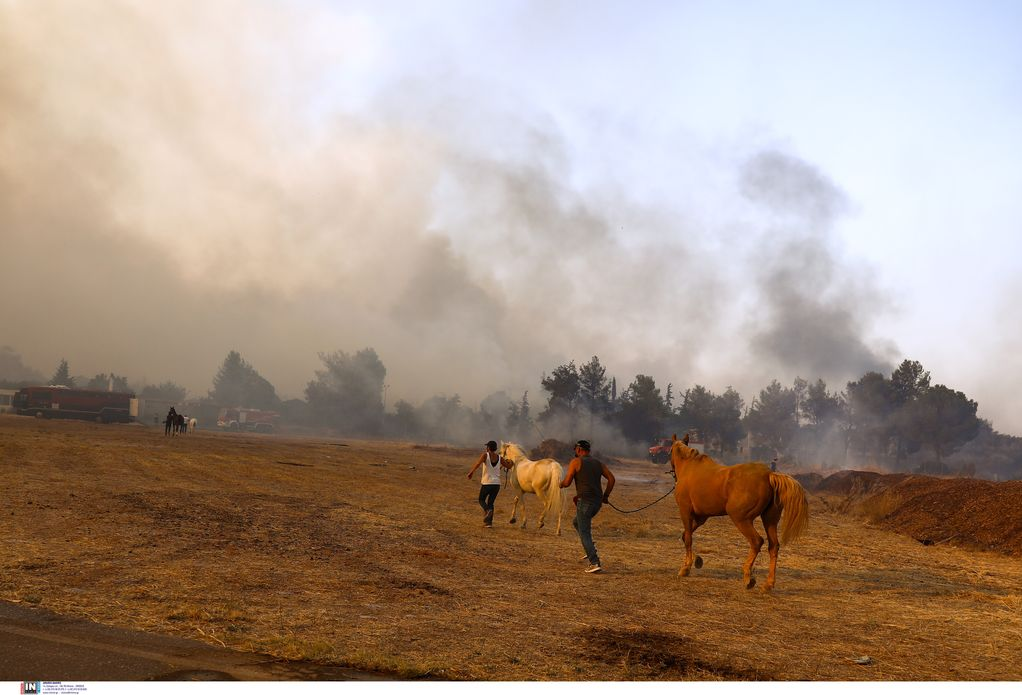 Βαρυμπόμπη: Ολοκληρώθηκε η απομάκρυνση των αλόγων που κινδύνευσαν από τη φωτιά