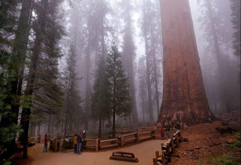Καλιφόρνια-Πυρκαγιές: Καλύπτουν με φύλλα αλουμινίου μεγάλα δέντρα για να τα προστατεύσουν