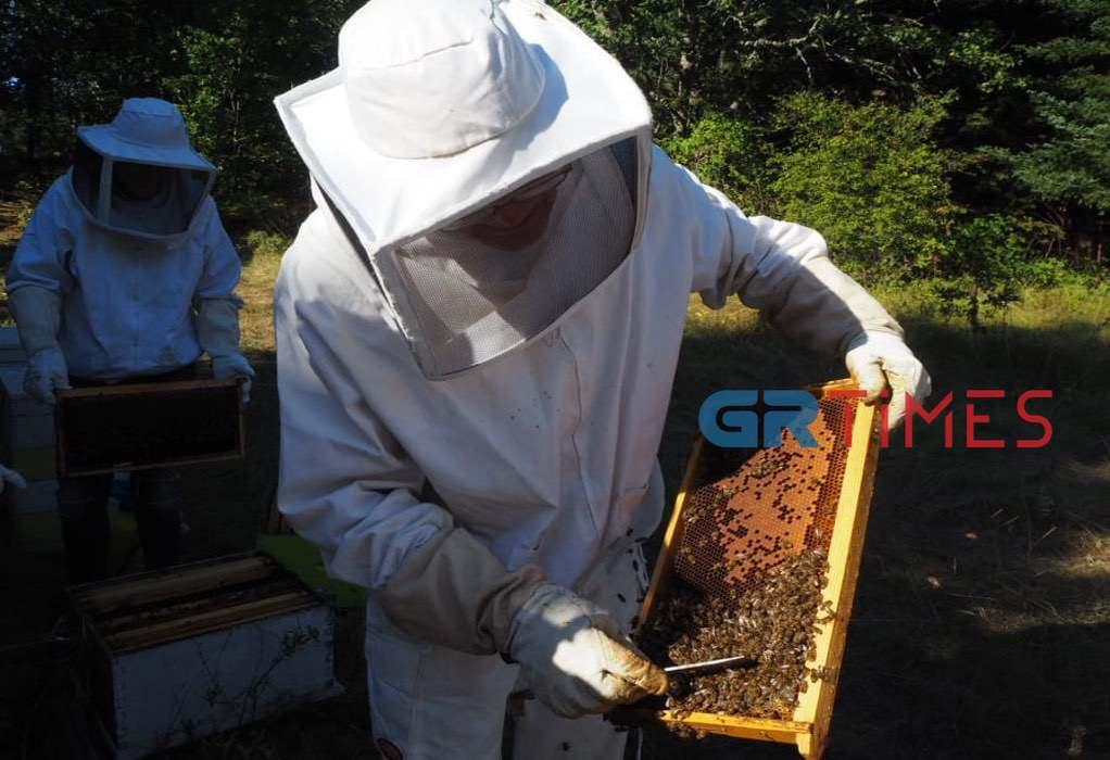 Χαλκιδική: Η εμπειρία ως μελισσοκόμος στο δάσος του Χολομώντα (ΦΩΤΟ + VIDEO)