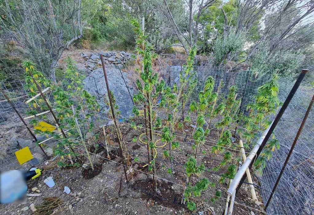 Χίος: Συνελήφθη άνδρας για καλλιέργεια, κατοχή και διακίνηση ναρκωτικών (ΦΩΤΟ)