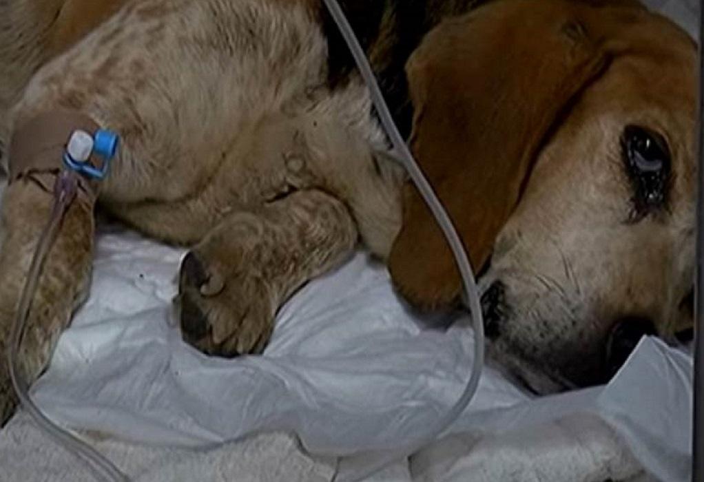 Σοκ στην Κρήτη: Πέταξαν σκυλίτσα με όγκο σε φαράγγι