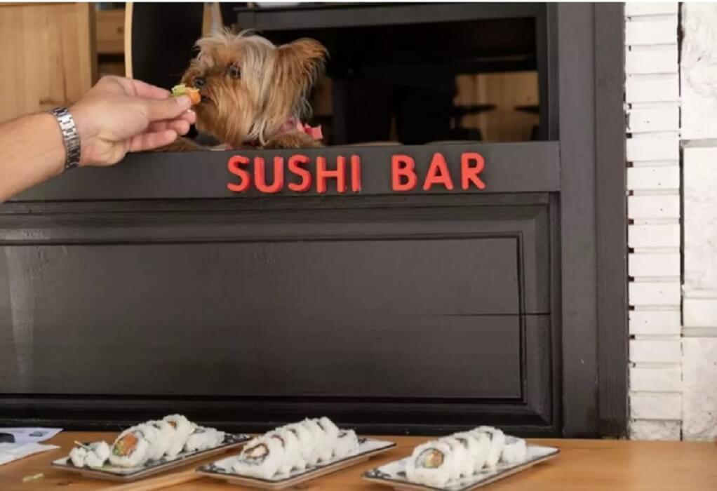 Θεσσαλονίκη: Εστιατόριο σερβίρει σούσι σε… τετράποδα
