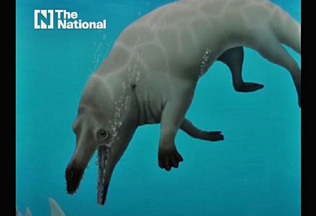 Αίγυπτος: Ανακαλύφθηκε προϊστορική τετράποδη φάλαινα