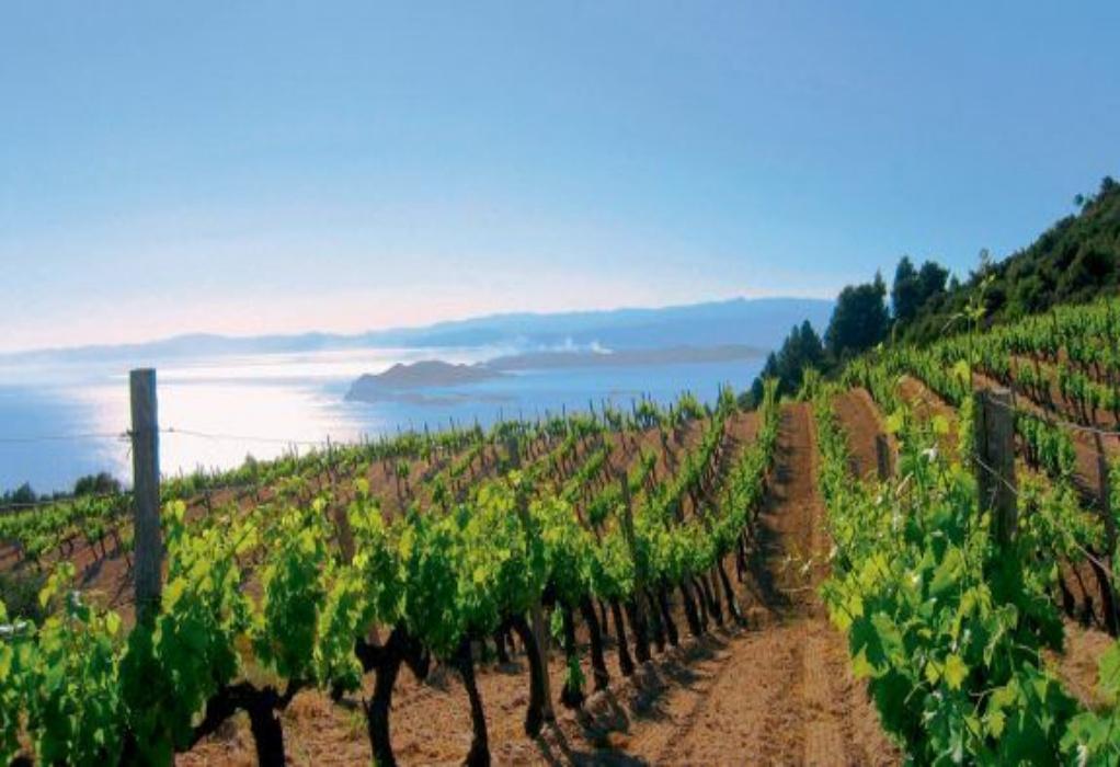 Πτώση κατά 13% στην παραγωγή οίνου στην ΕΕ για φέτος