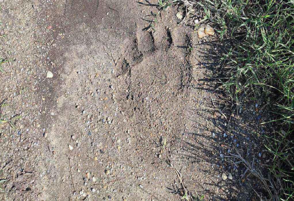 Θεσσαλονίκη: Αρκούδα εμφανίστηκε στις όχθες του Αξιού (ΦΩΤΟ)