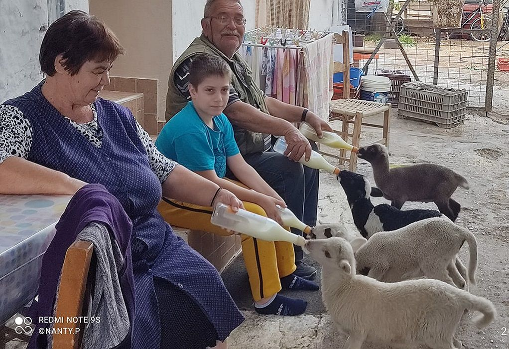 Σκινιάς-Κρήτη: Οικογένεια ταΐζει αρνάκια με το μπιμπερό (ΦΩΤΟ)