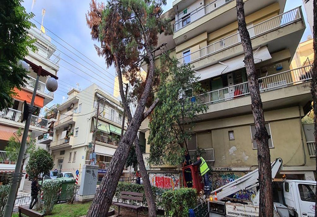 Δέντρο έπεσε πάνω σε πολυκατοικία στην Καλαμαριά – Επενέβη ο Δήμος