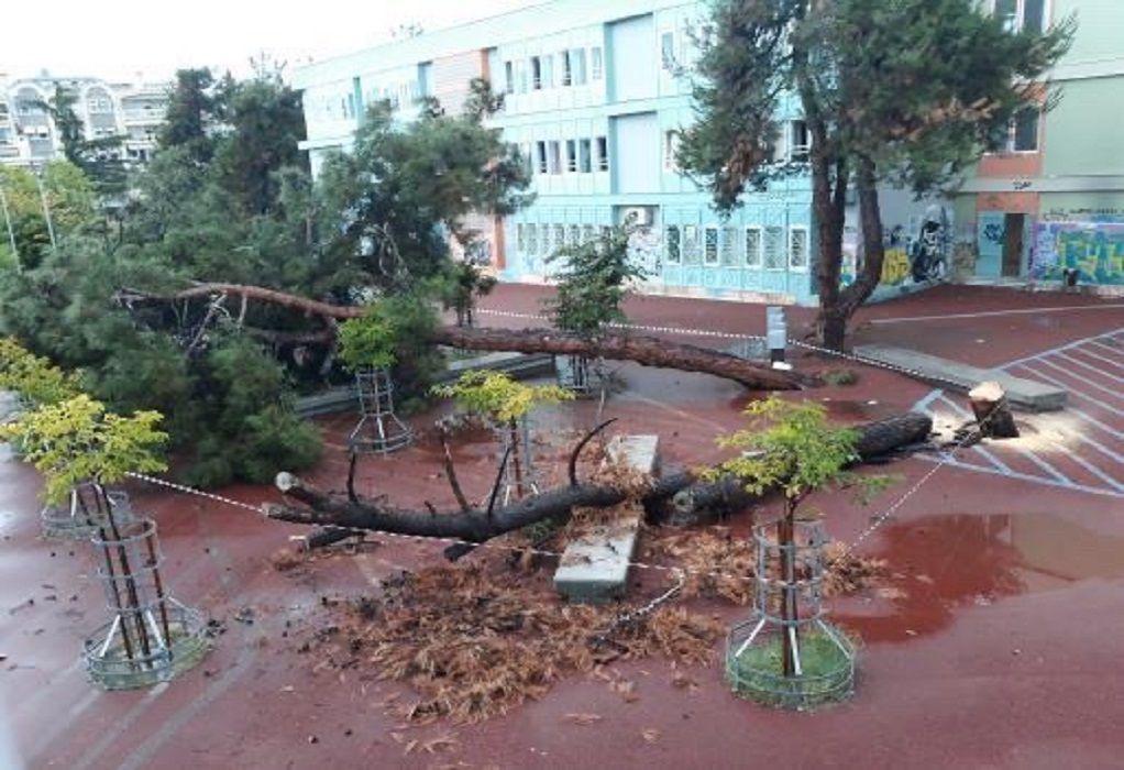 Κακοκαιρία «Μπάλλος»: Μεγάλο δέντρο έπεσε σε αυλή σχολείου στη Θεσσαλονίκη (ΦΩΤΟ)