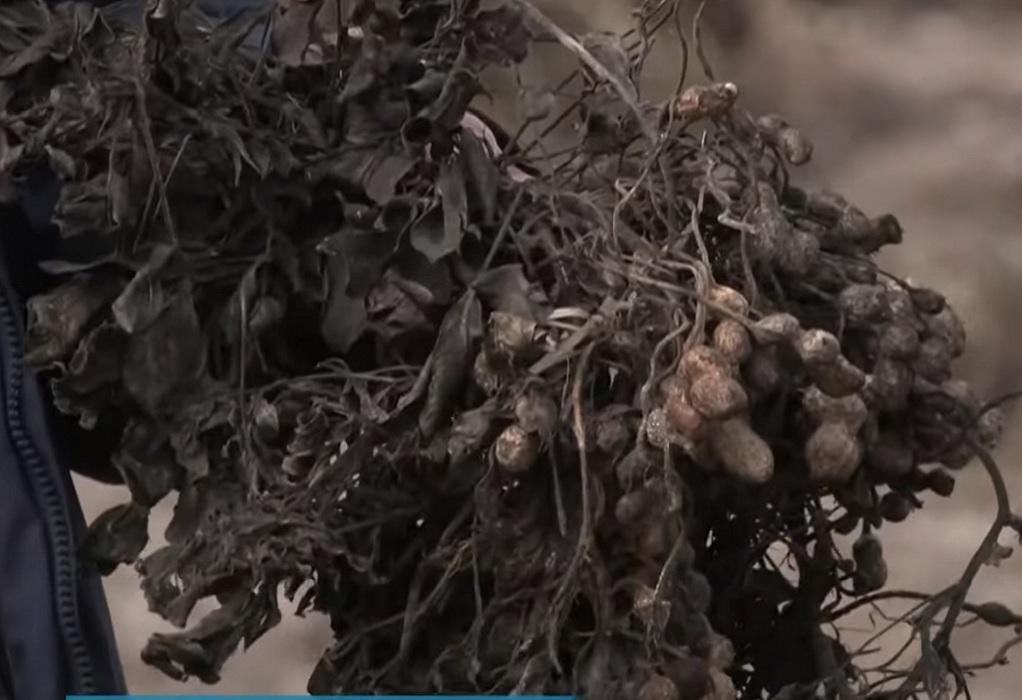 """Σέρρες: Καταστράφηκαν ολοσχερώς οι καλλιέργειες από τον """"Μπάλλο"""" (VIDEO)"""