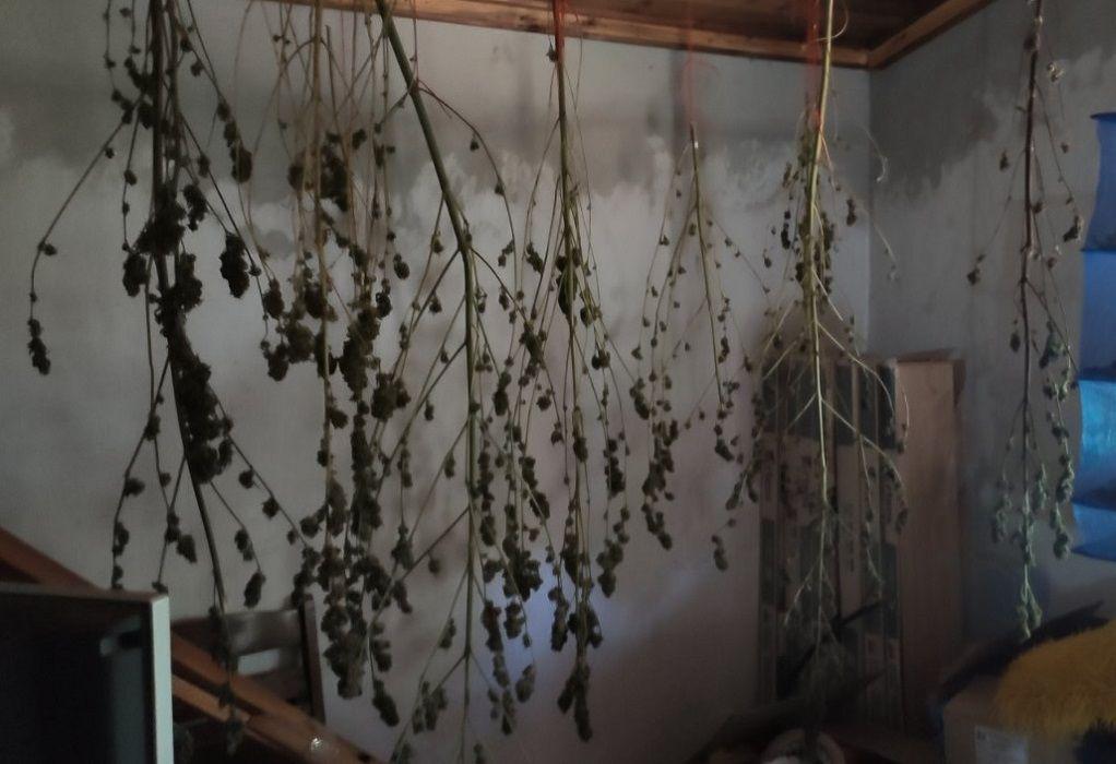 Ημαθία: Διατηρούσε στο σπίτι του εργαστήρι κάνναβης (ΦΩΤΟ-VIDEO)