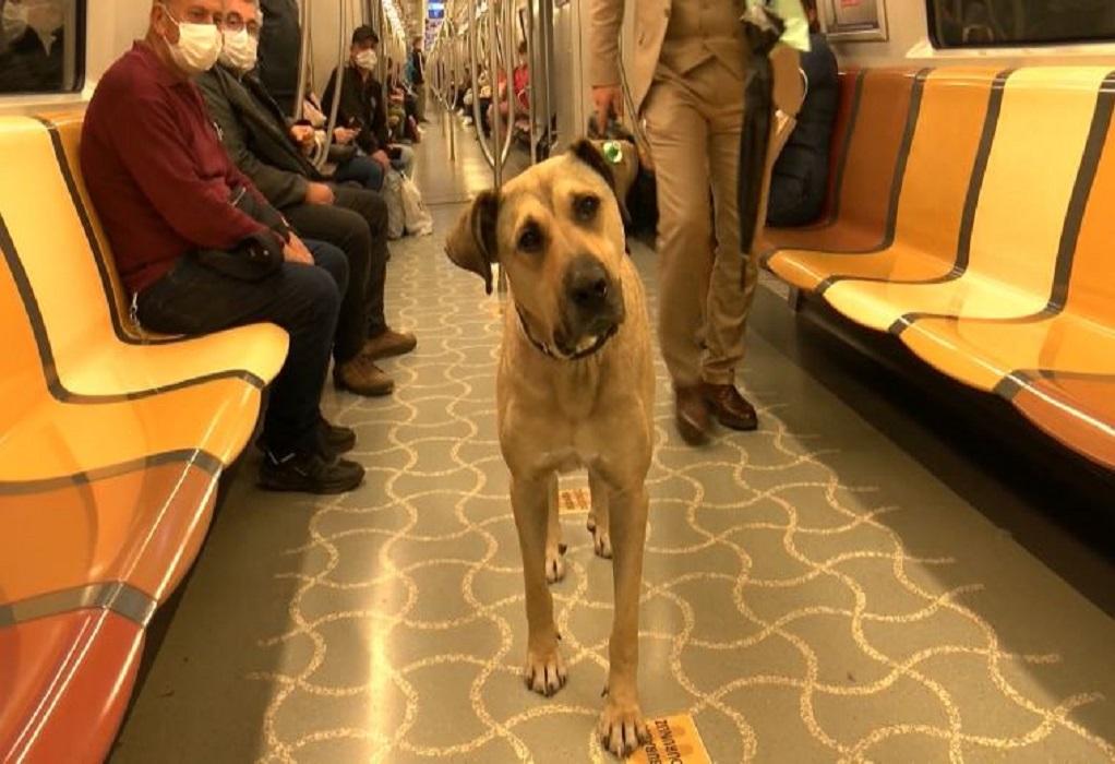 Boji: Ο πιο διάσημος σκύλος της Κωνσταντινούπολης